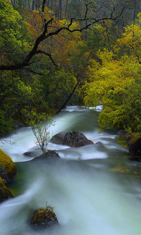 壁纸 风景 山水 摄影 桌面 480_800 竖版 竖屏 手机