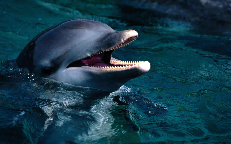 壁纸 动物 海洋动物 鲸鱼 桌面 1440_900
