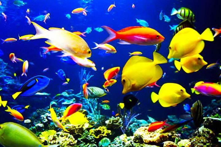 海洋世界彩鱼.jpg
