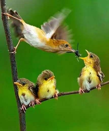鸟儿喂食.jpg