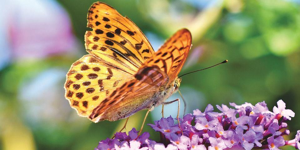 butterfly-3823068_960_720.jpg