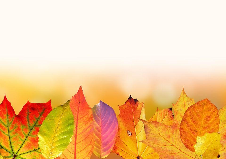 autumn-1649440_960_720.jpg
