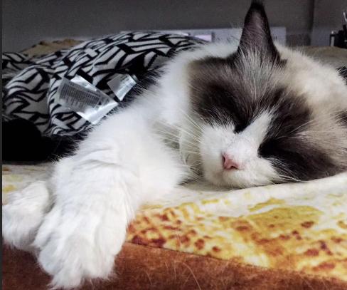 猫睡觉.png