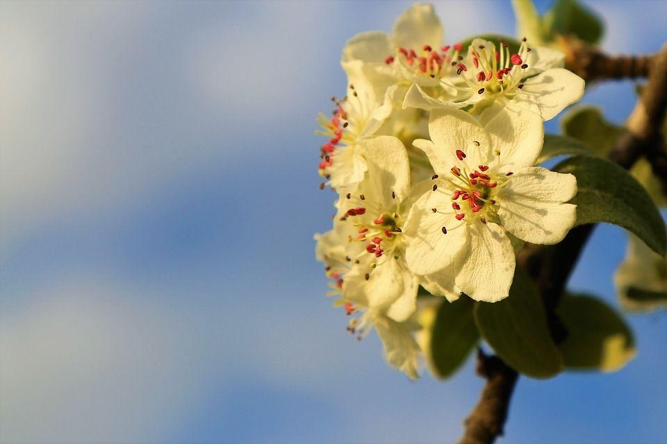 flower-4041182_960_720.jpg