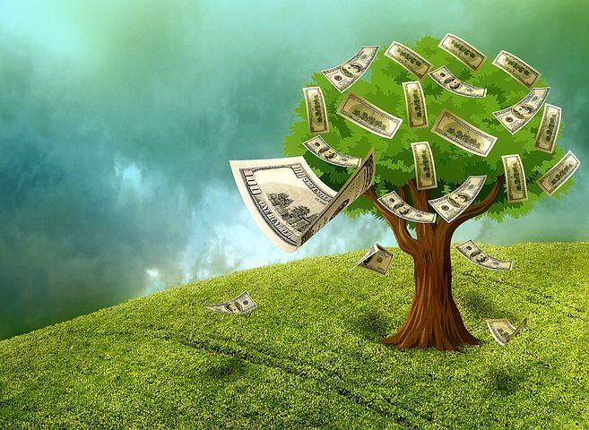 树上的钱.jpeg